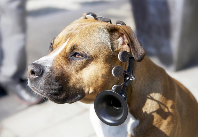 Η επαναστατική συσκευή αναμένεται να απαντήσει το προαιώνιο ερώτημα του ανθρώπου αν ο σκύλος του είναι όντως καλό παιδί