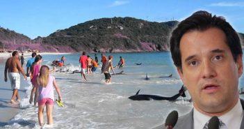 Δεκάδες δελφίνια εγκλωβίστηκαν σε παραλία κοντά σε ταβέρνα που έτρωγε ο Άδωνις Γεωργιάδης