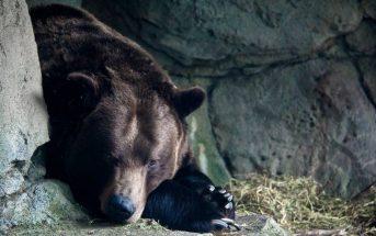 Η αρκούδα παραδέχτηκε ότι μέχρι την τελευταία στιγμή δεν είχε χάσει την ελπίδα της να κερδίσει ένα από τα πολυπόθητα αγαλματίδια