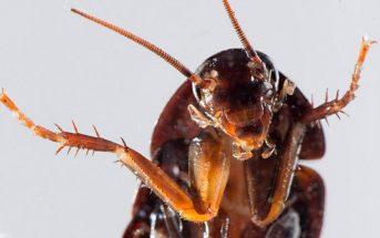 Έτοιμες να τρομοκρατήσουν τους Έλληνες για ακόμα μια χρονιά δηλώνουν οι κατσαρίδες της χώρας