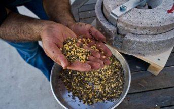 Προβληματισμένοι οι Έλληνες παραγωγοί φάβας από την έλλειψη λάκκου