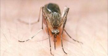 Δεν πιστεύουμε να μας ξεχάσατε, λένε τα πρώτα κουνούπια της χρονιάς