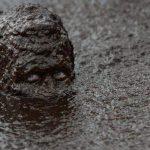 Τέλεια η συναυλία των Depeche Mode, δηλώνει φαν που βρέθηκε θαμμένος στη λάσπη