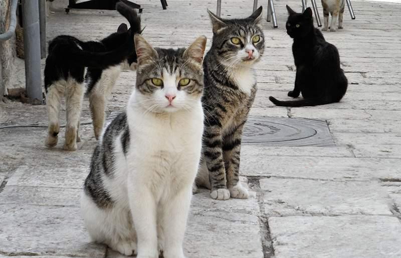 Απόλυτα ικανοποιημένες οι γάτες της χώρας με τη συνέχιση της απεργίας των συμβασιούχων