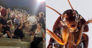 Πιο σιχαμεροί και από μας αυτοί που χτυπάνε γυναίκες, επιβεβαιώνουν οι κατσαρίδες της χώρας