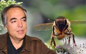 Την ανησυχία τους ότι θα επιστρέψει στην μελισσοκομία ο Δημήτρης Κουφοντίνας εκφράζουν οι μέλισσες της χώρας