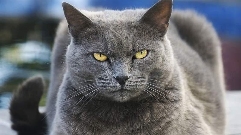 Με αντίποινα προειδοποιούν για τις περιπολίες σκύλων οι γάτες των Εξαρχείων